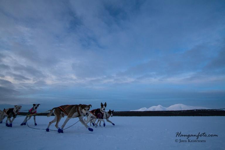 Ikke alle hundespannene hadde vært på fotograftilvenning, men de kom over det...Skal tro hva de tenkte?