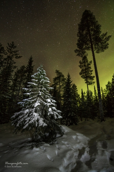 Juletre i skogen :-)