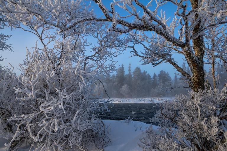 Frost på trærne og fin dis i lufta som duser ut bakgrunnen litt. Helt klart pene fotoforhold.