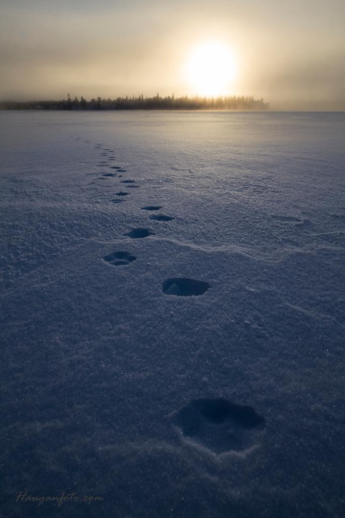 Her har reven rasket over isen.