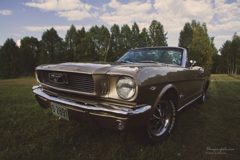 Mustang i solnedgang